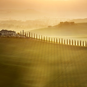 cypress avenue by Marcin Sobas (MarcinSobas)) on 500px.com