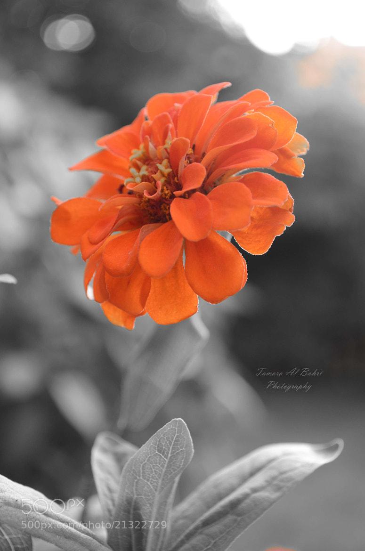 Photograph Orange by Tamara Al Bahri on 500px