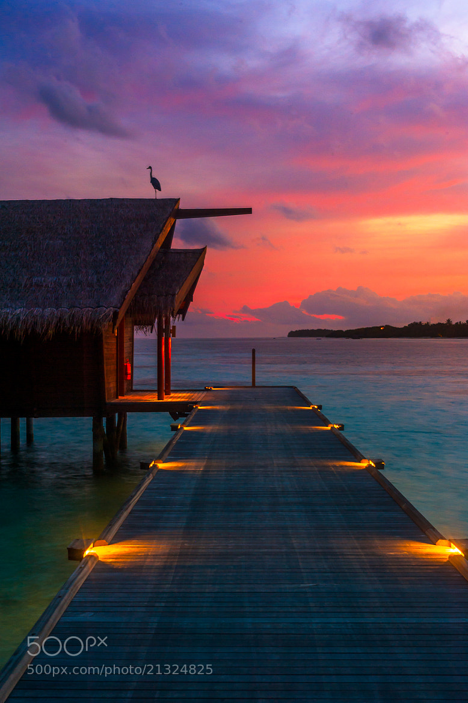 Photograph The Bird & The Sunset by Alyaksandr Stzhalkouski on 500px