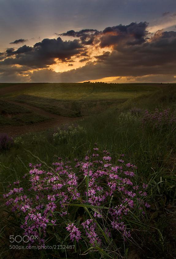 Photograph Sunset flower by Hamid Reza Farzandian on 500px