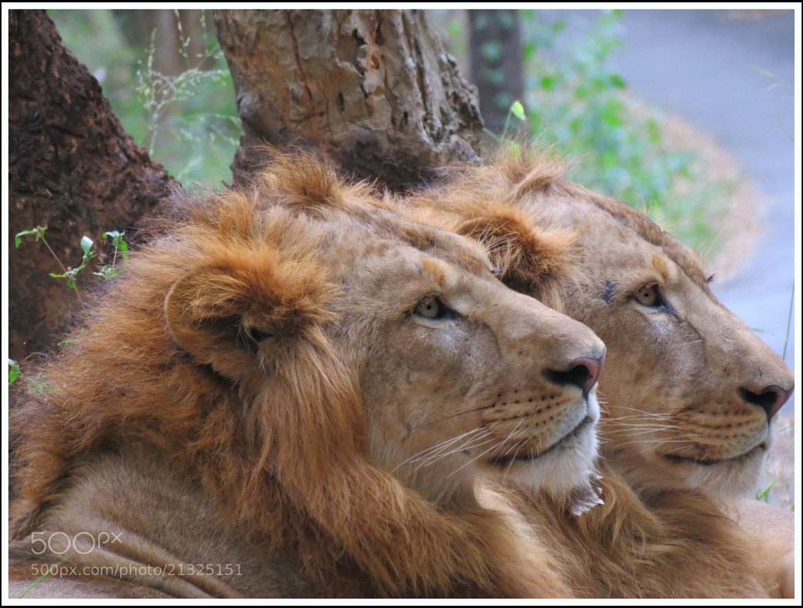 Photograph Majestic Family by Sinu Nair on 500px