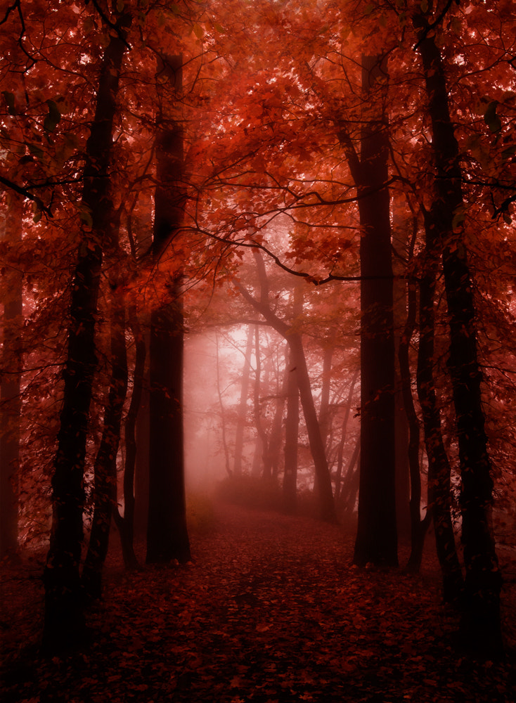 Photograph Lead me into the light by Magdalena Narloch on 500px