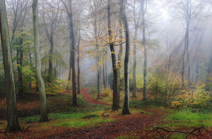 Photograph Autumn Morning by Ceri Jones on 500px