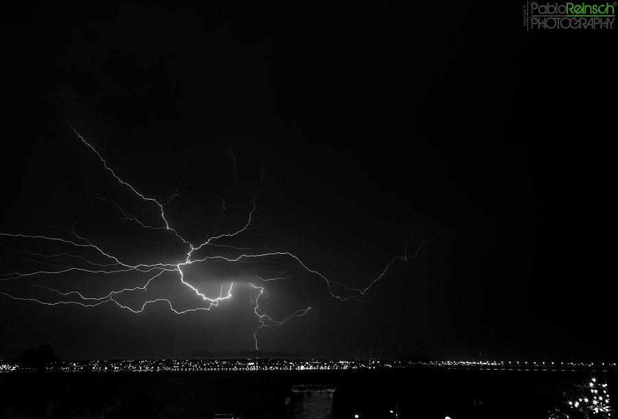 The Lightning Tree.-