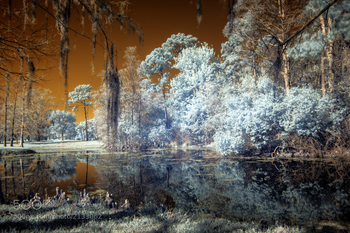 Photograph Infrared HDR Orlando Florida by David  on 500px