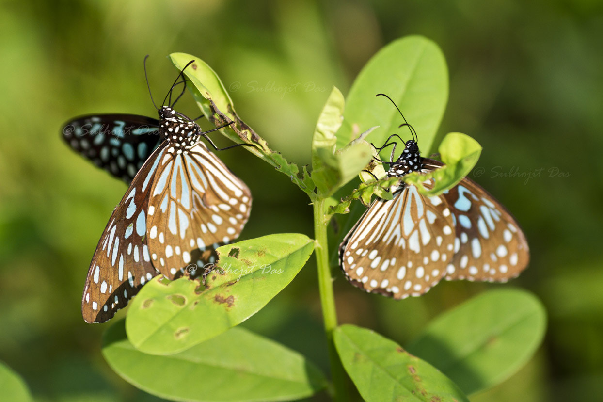 Photograph Twins by Subhojit Das on 500px