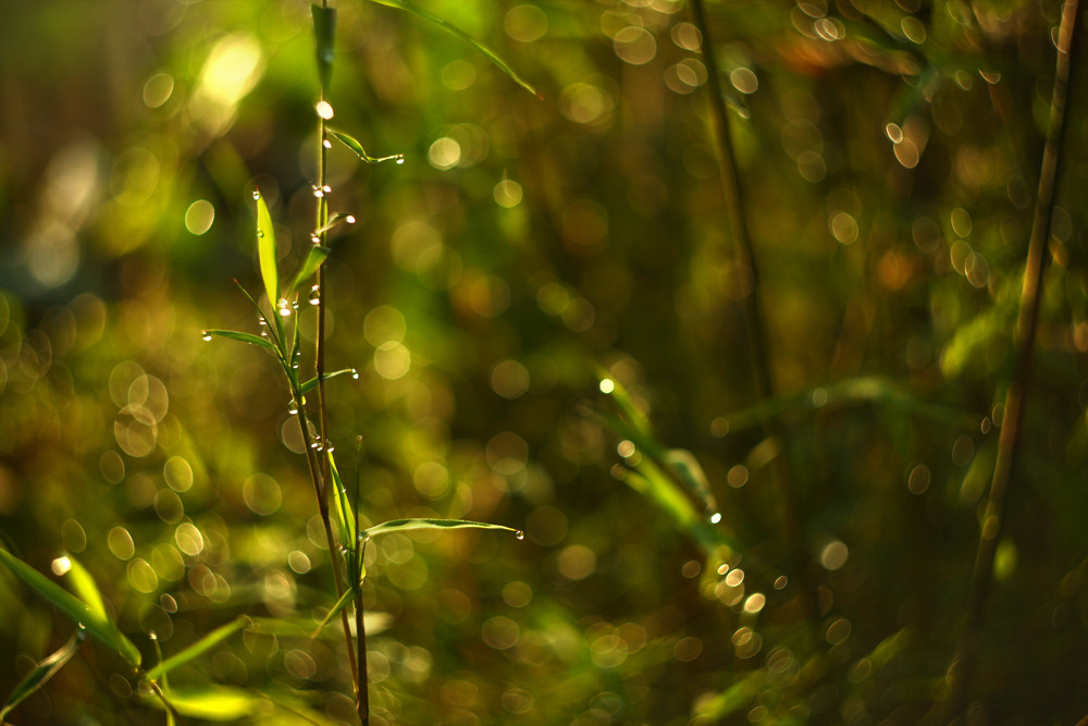Photograph Bokeh by yutthapoom noomdi on 500px