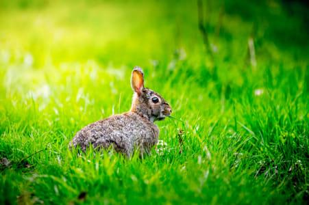 Rabbit Thang