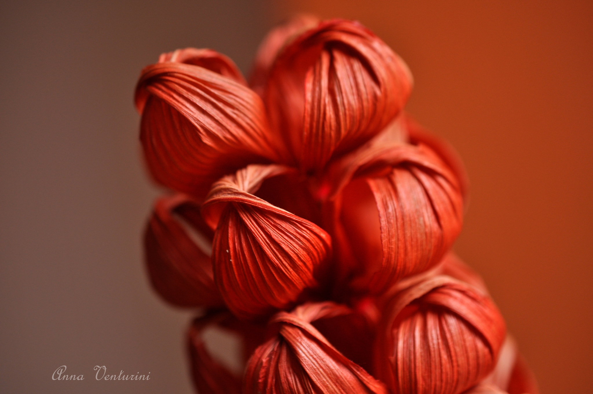 Photograph Details 1 by Anna Venturini on 500px