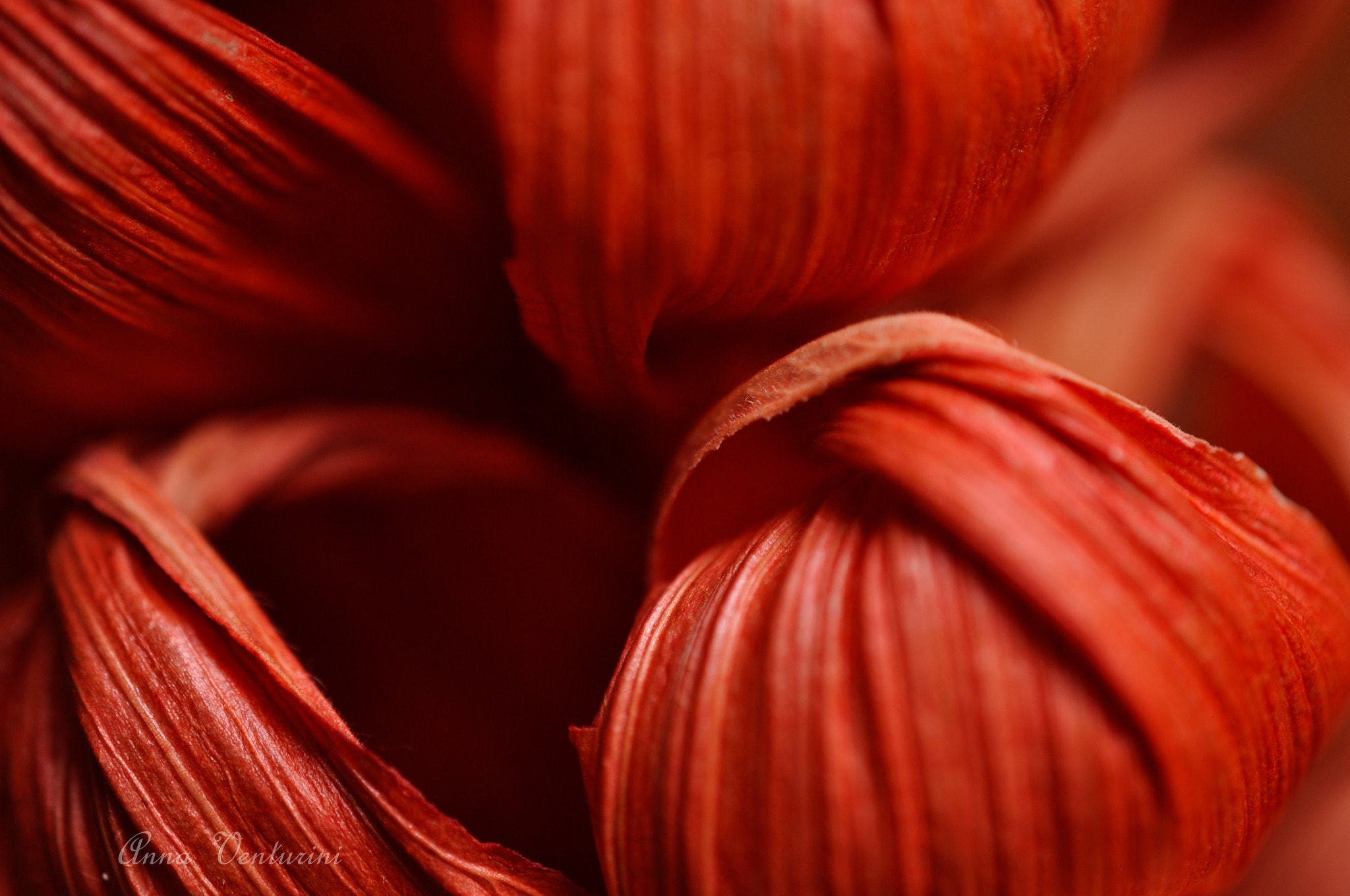 Photograph Details 3 by Anna Venturini on 500px
