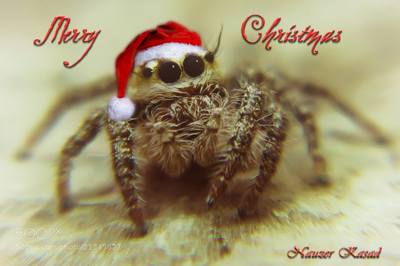 Photograph Merry Christmas by Nauzer Kasad on 500px