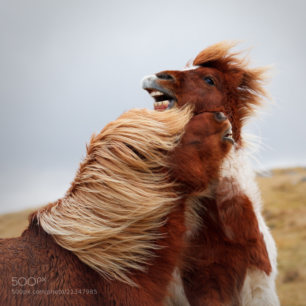Photograph storm horse play by dominique walterson on 500px