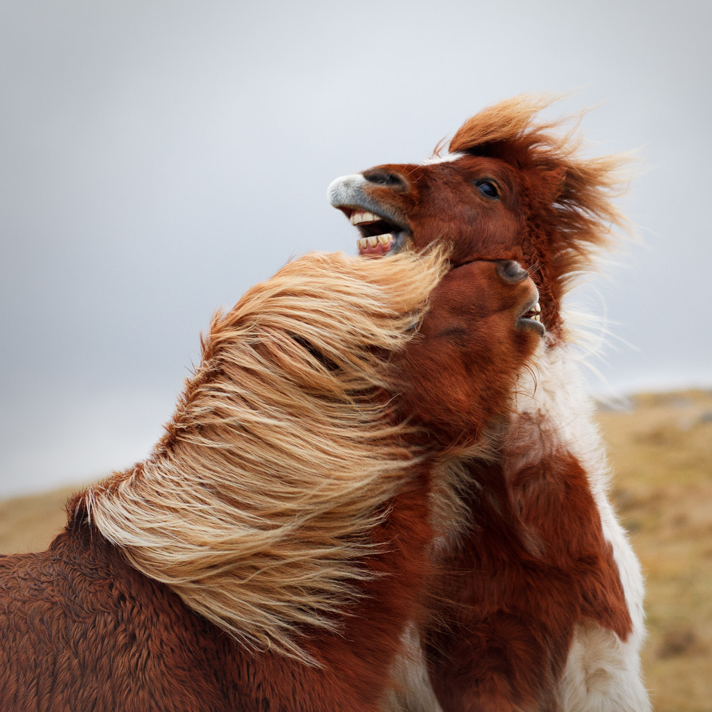 Photograph storm horse play by domi w on 500px