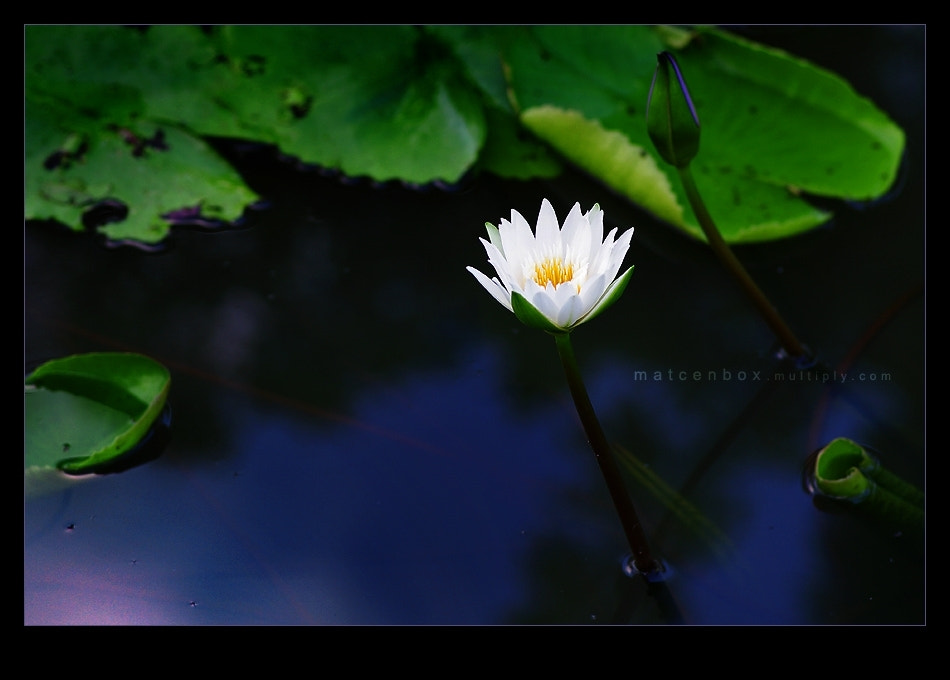 Photograph LOTUS by Matcenbox  on 500px