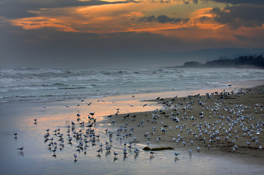 Photograph   sea state seven by ivo pandoli on 500px