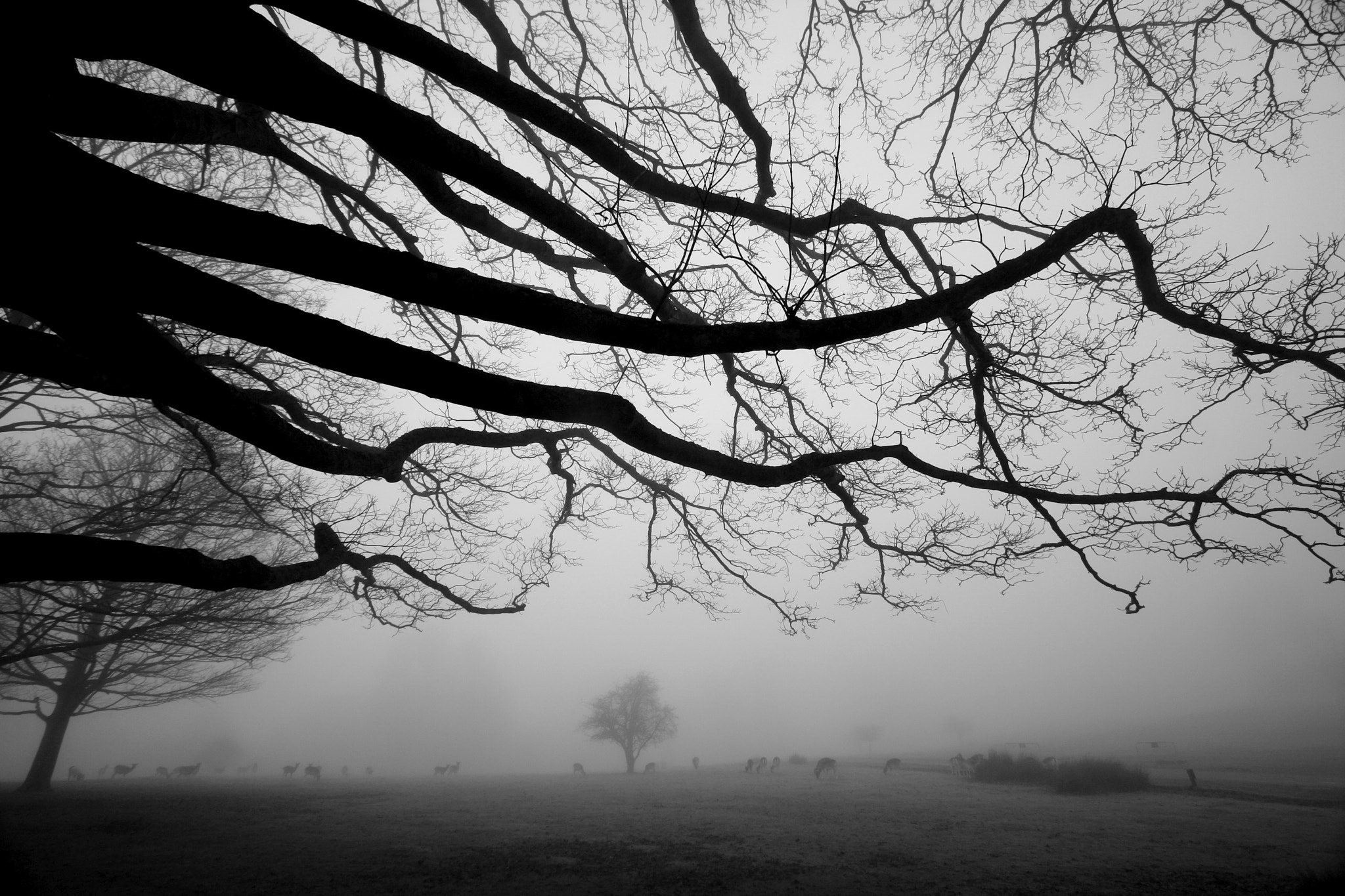 Photograph Haunted Oak Tree in Sevenoaks by Patrick Ambrose on 500px