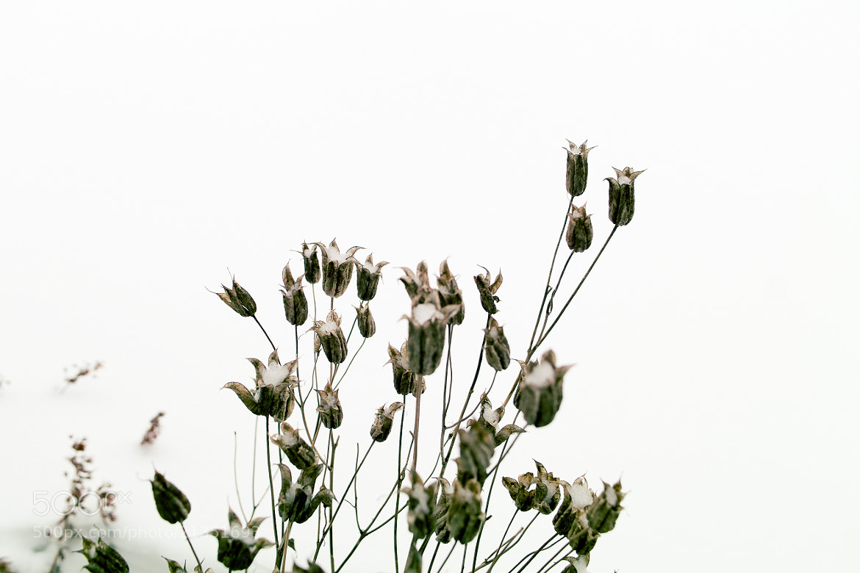 Photograph Winter flower by Kristofer Ristolainen on 500px