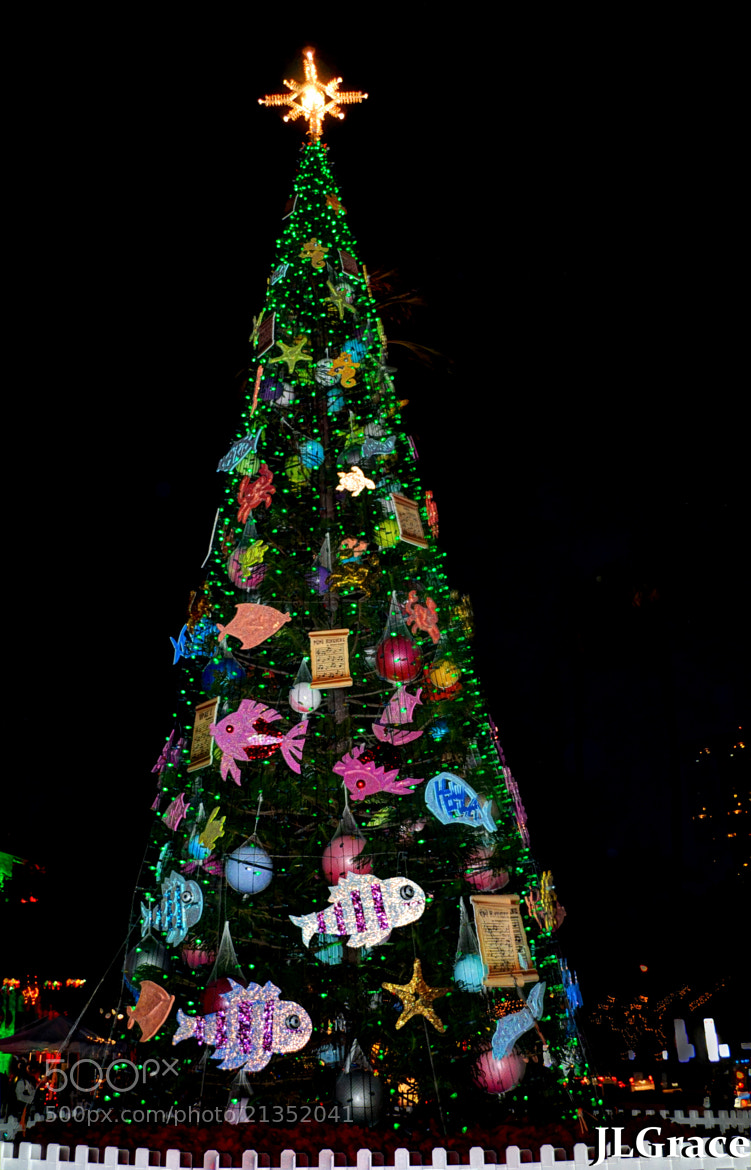 Photograph Oh Christmas Tree! by Janis Grace on 500px