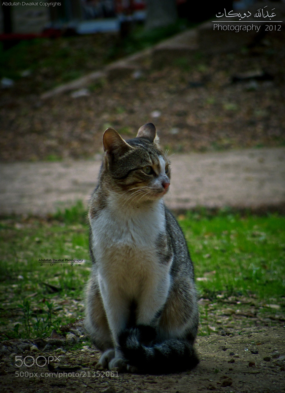 Photograph Sweet kitty *_*  by Abdullah Dwaikat on 500px