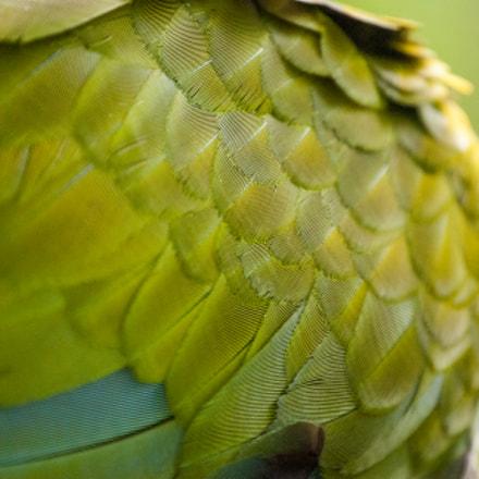 plumaje verde 3