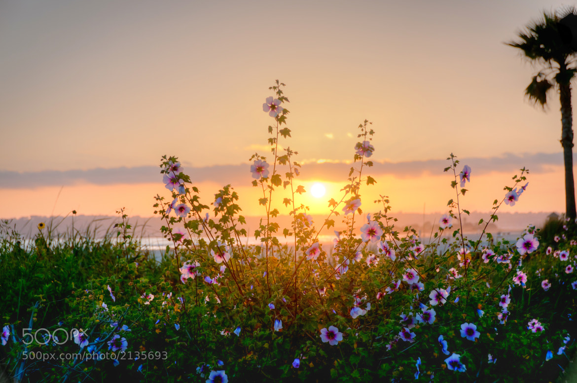 Photograph Sunset Flowers by Kevin Tong on 500px