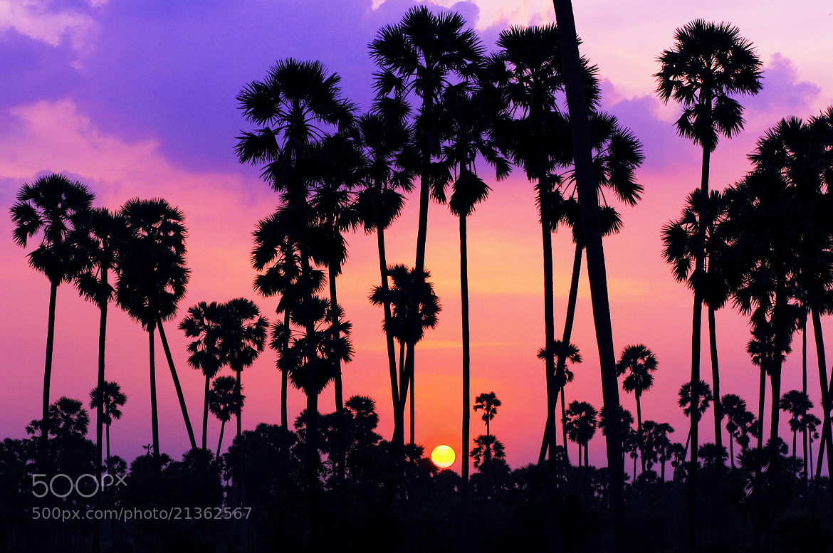 Photograph Sunset by Apple Chu on 500px