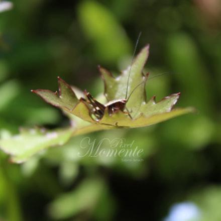 Little Green Grashopper - Kleines grünes Hüpferli