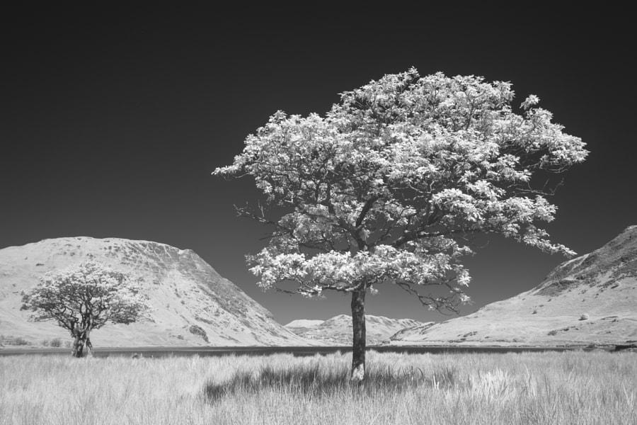 Crummock IR Trees