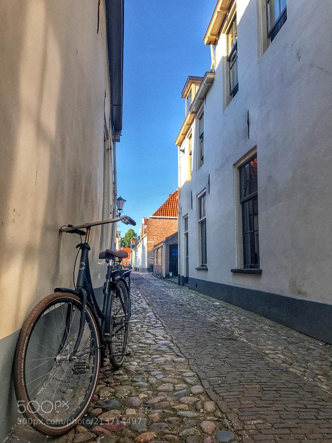 Scenic street in summer city