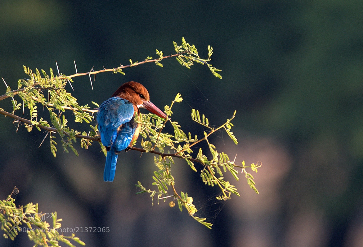 Photograph The Blue Catch by Advaet Sharma on 500px