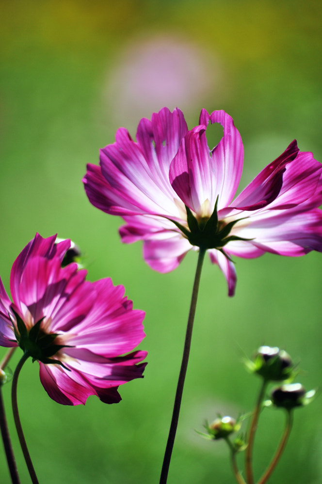 Photograph cosmos by keiji 403 on 500px