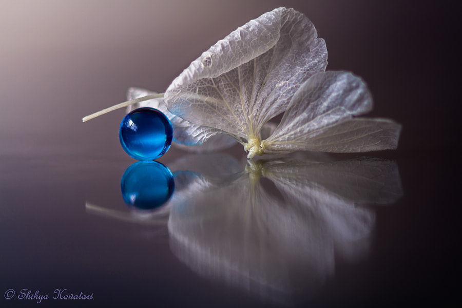Small Collections by Shihya Kowatari on 500px.com
