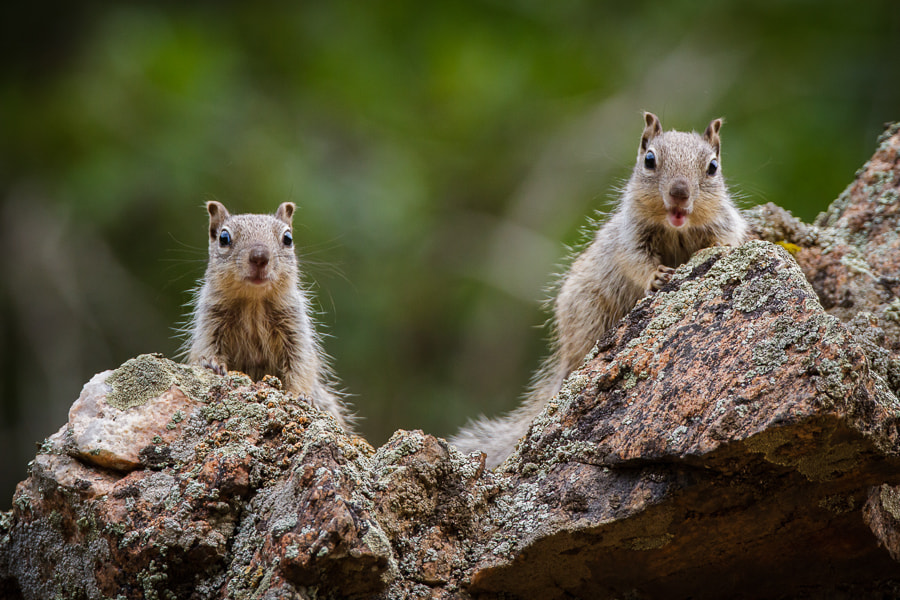 Photograph .: The Chatty Squirrels :. by Jon Rista on 500px
