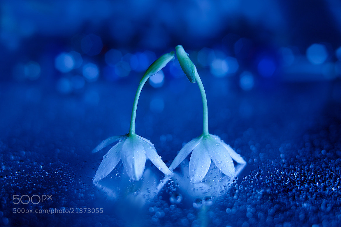 Photograph Little story in Holy night☆彡 by Lafugue Logos   on 500px