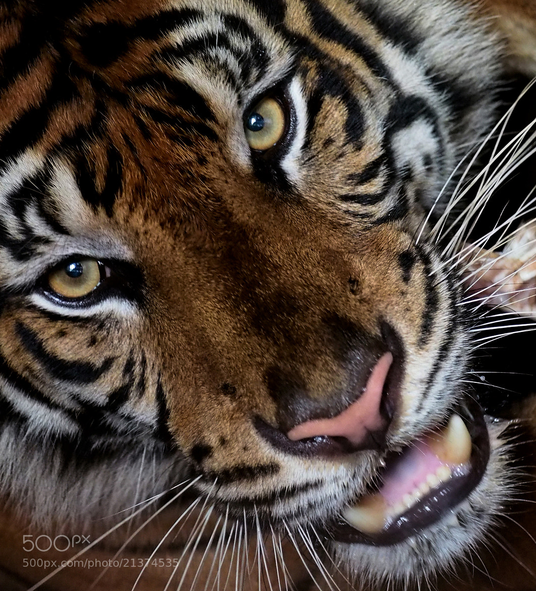 Photograph Look at my eyes by Prabu dennaga on 500px