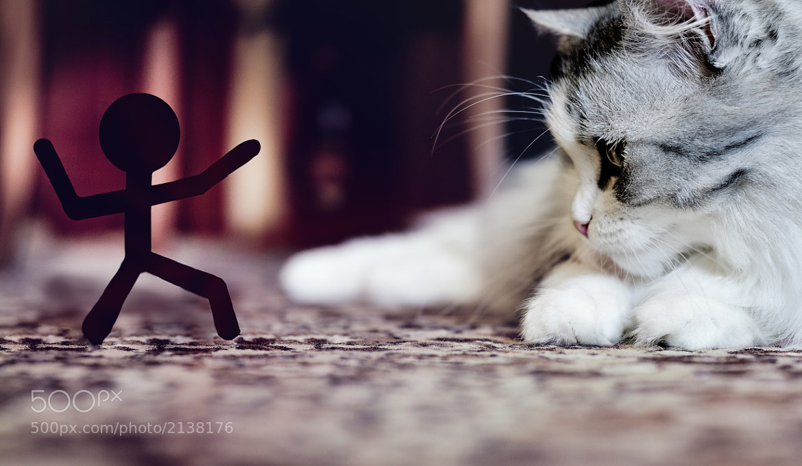 Photograph Stickman vs a Cat by Sergey Zaitsev on 500px