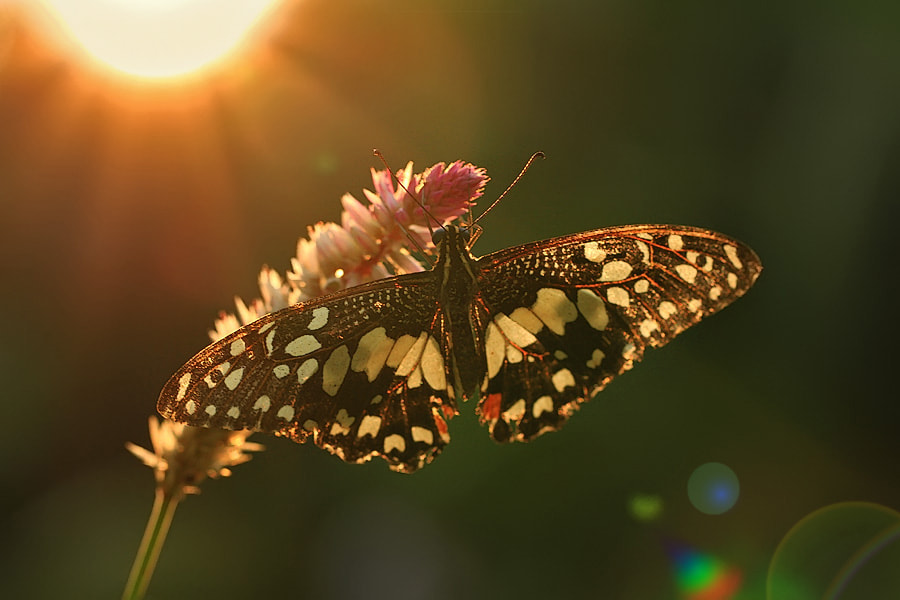 Photograph afternoon light by shikhei goh on 500px