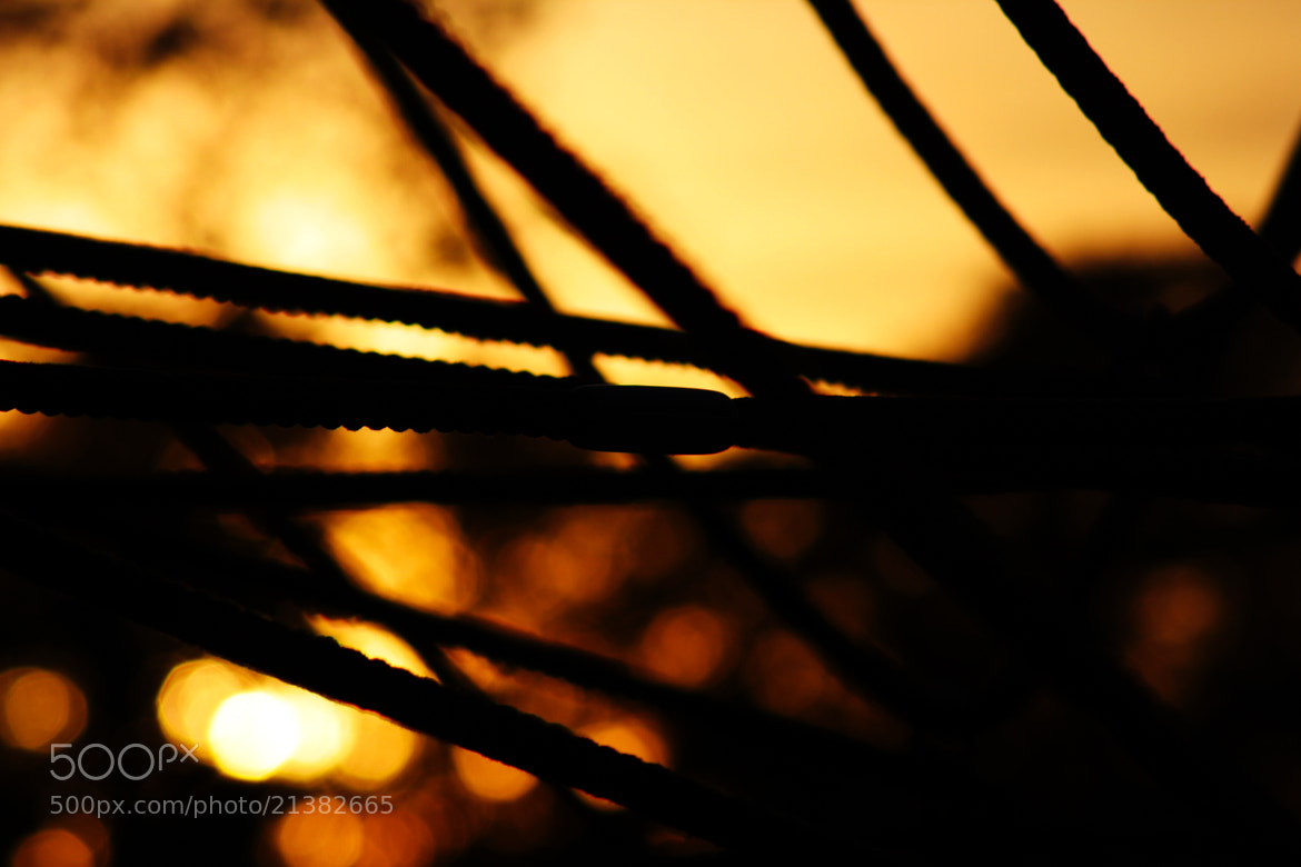 Photograph Wires in the sun by Marius Rein on 500px