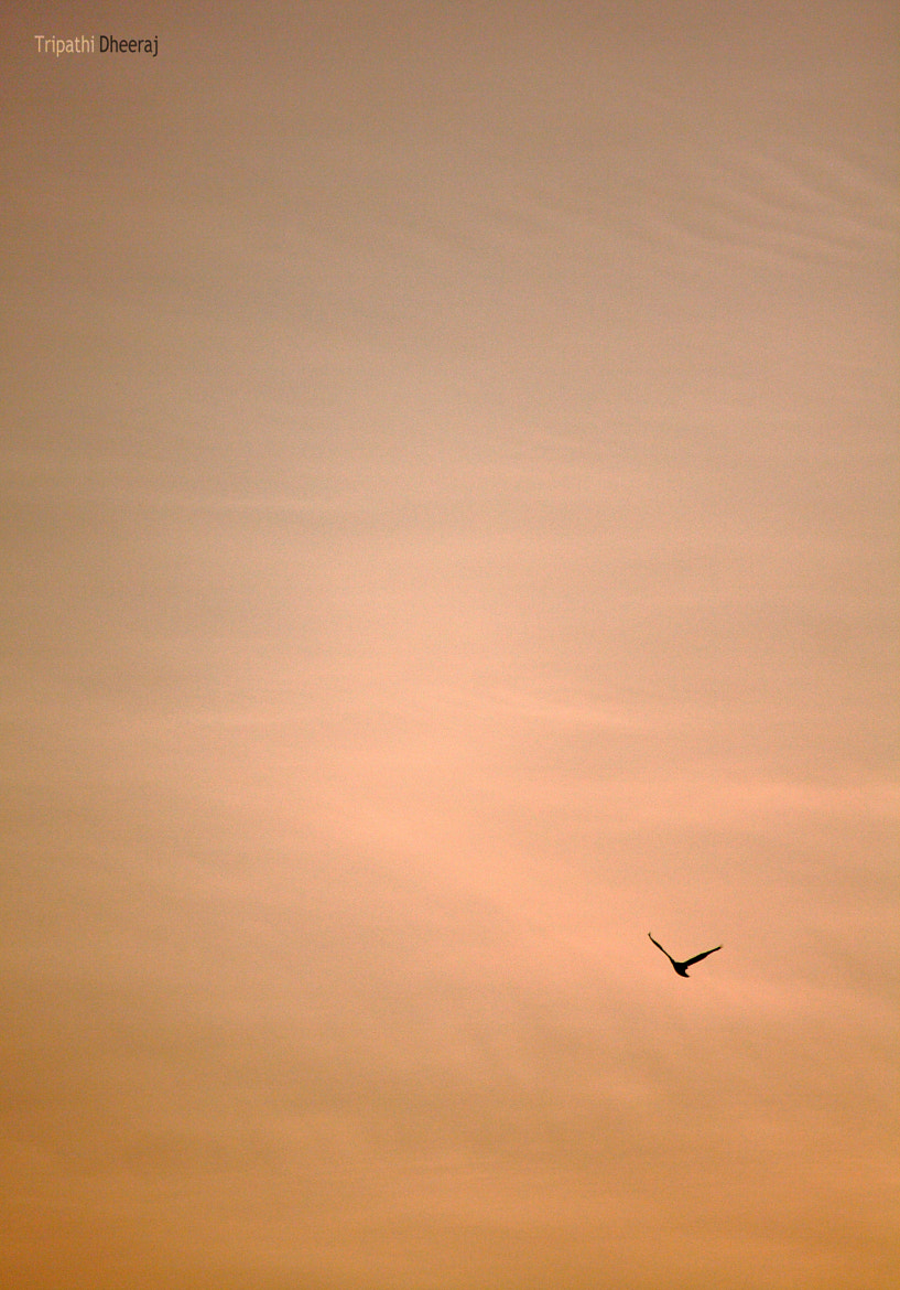 Photograph Rise by Dheeraj Tripathi on 500px