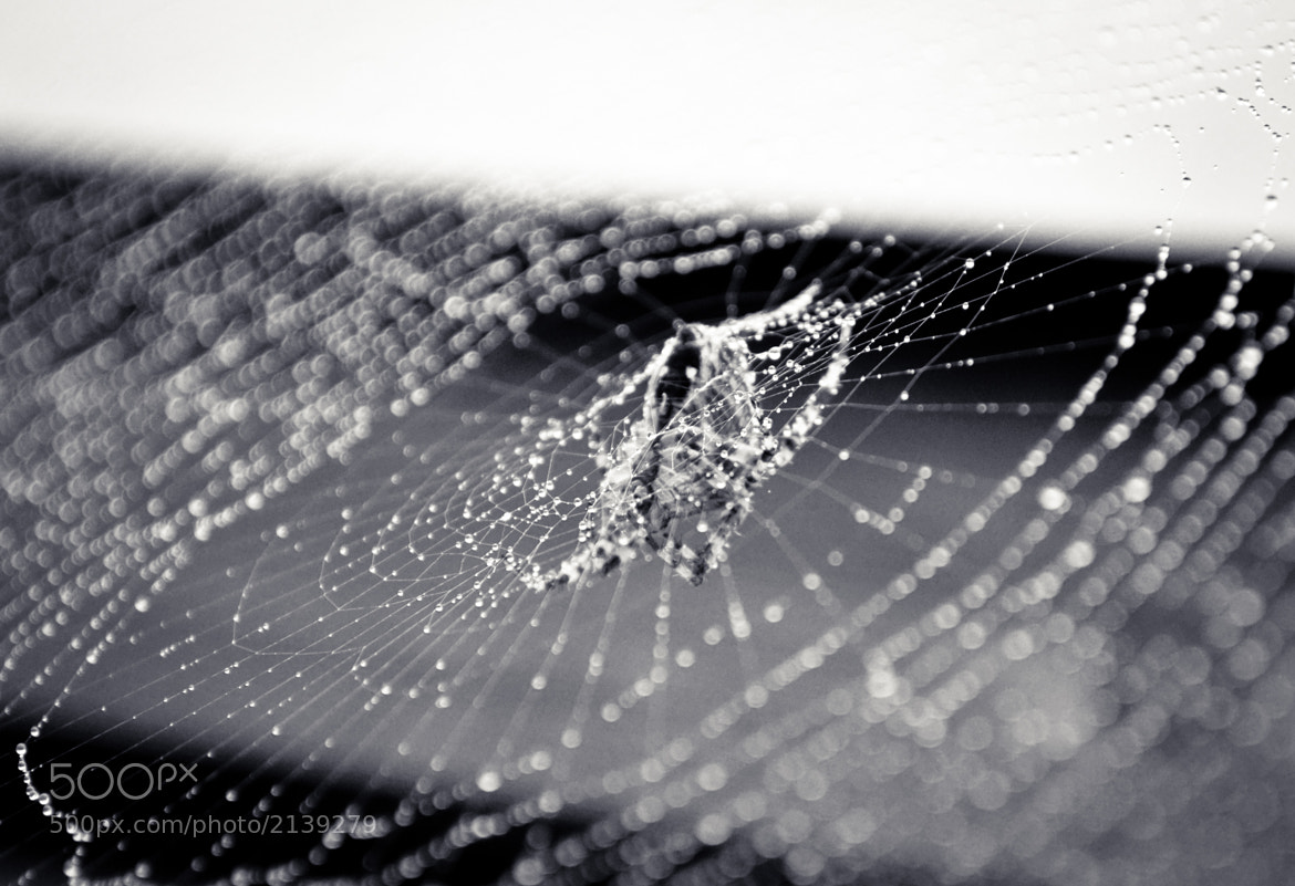 Photograph On a spider's web (2) by Glafira Kushnir on 500px