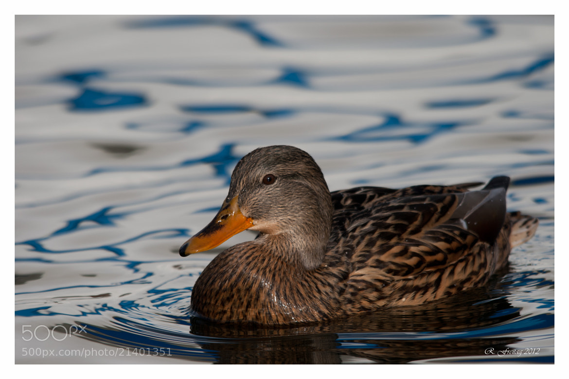 Photograph Duffy Duck by Regina F on 500px