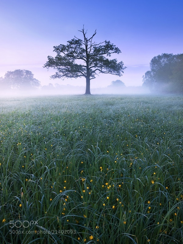 Photograph Floodplain Meadow Dawn by Jan Bainar on 500px