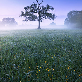 Floodplain Meadow Dawn by Jan Bainar (janbainar)) on 500px.com