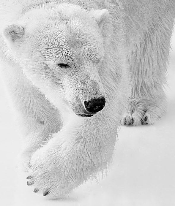Photograph White Force by Magali K. on 500px
