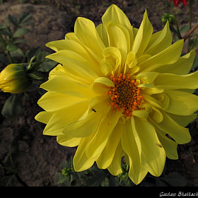 flowers by gautam bhattacharyya (purgbm2000)) on 500px.com