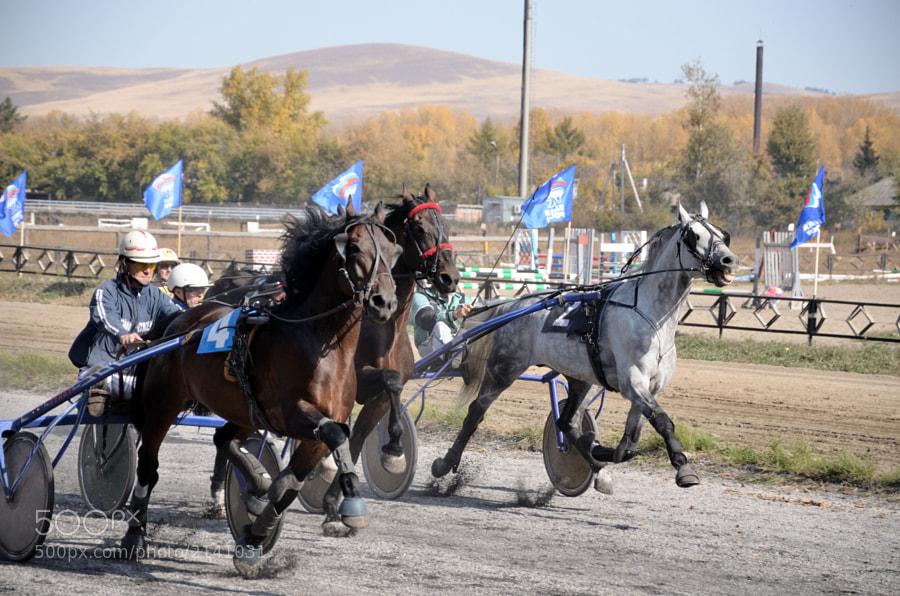 Horse_Racing_2
