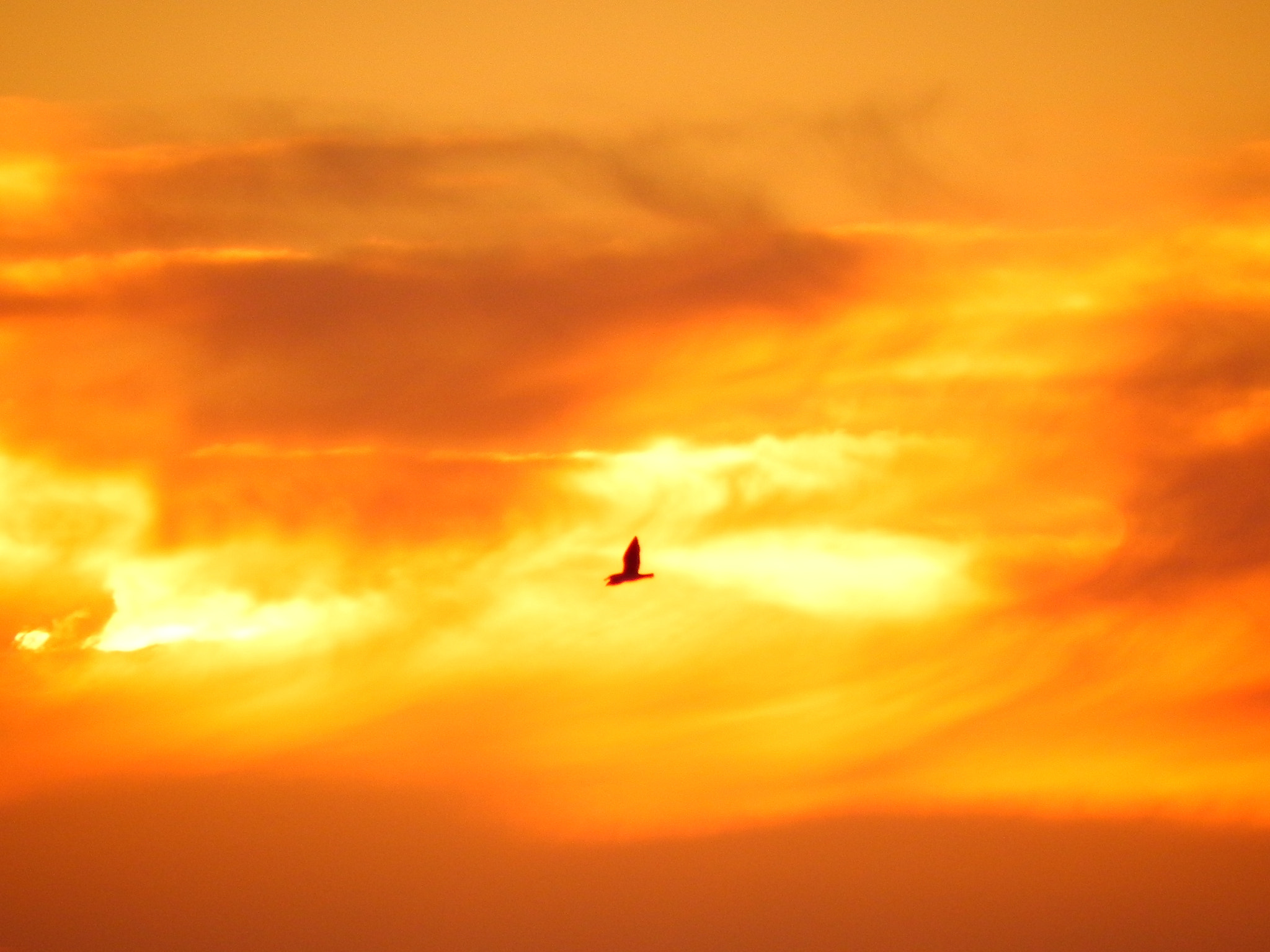 Photograph Seagull by Enzo Mardones on 500px