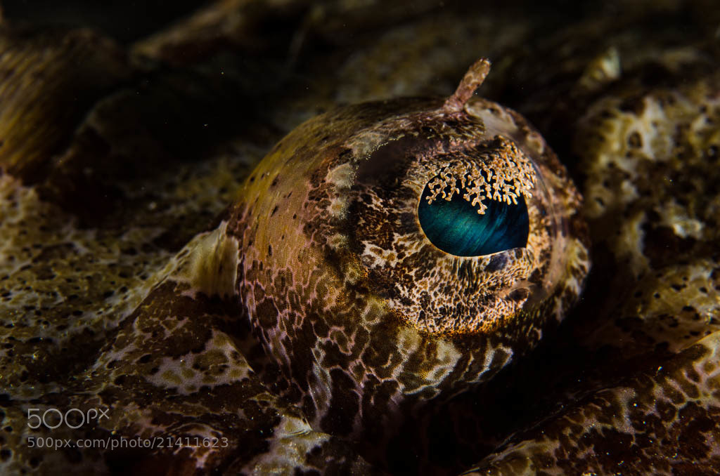 Photograph Open-eyed  by Mats Forsberg on 500px