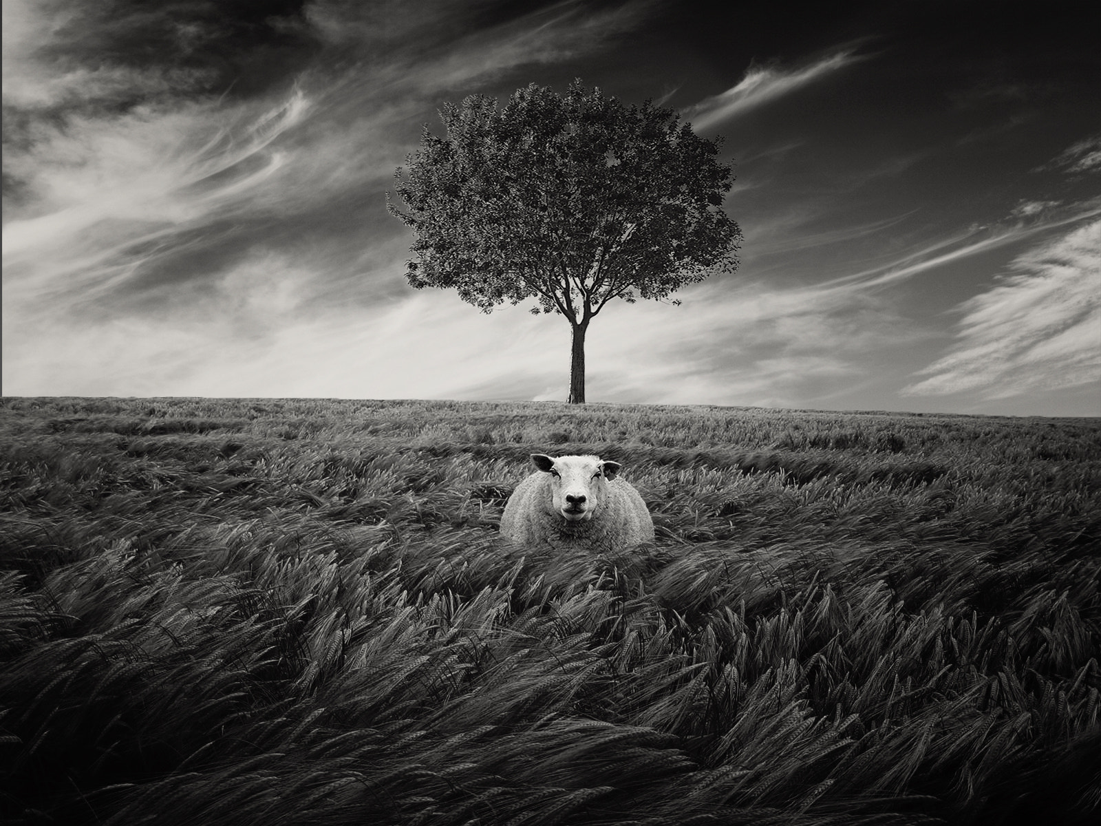 Photograph Alone by JC Vogt on 500px