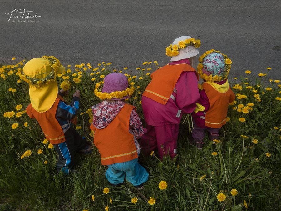 Dandelion pickers
